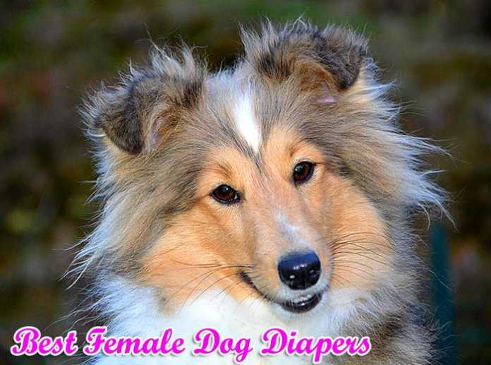 best female dog diapers