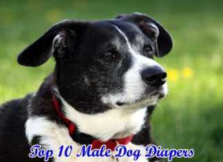 best male dog diapers