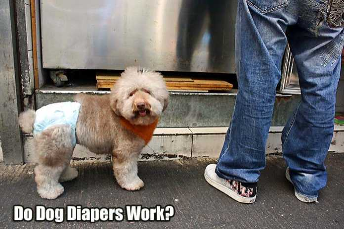 do dog diapers work?